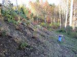Kunnon mäessä on haastetta. Katsotaan mitä meidän pensasprojektista tulee...
